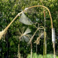 Botanischer Garten, St. Gallen: Zwirbelstroh und Blätterling – Windobjekte von Thomas Marbacher