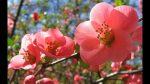 Den Duft des Frühlings wirken lassen