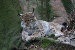 Einer der schönsten Wildparks der Schweiz: Peter und Paul in Rotmonten
