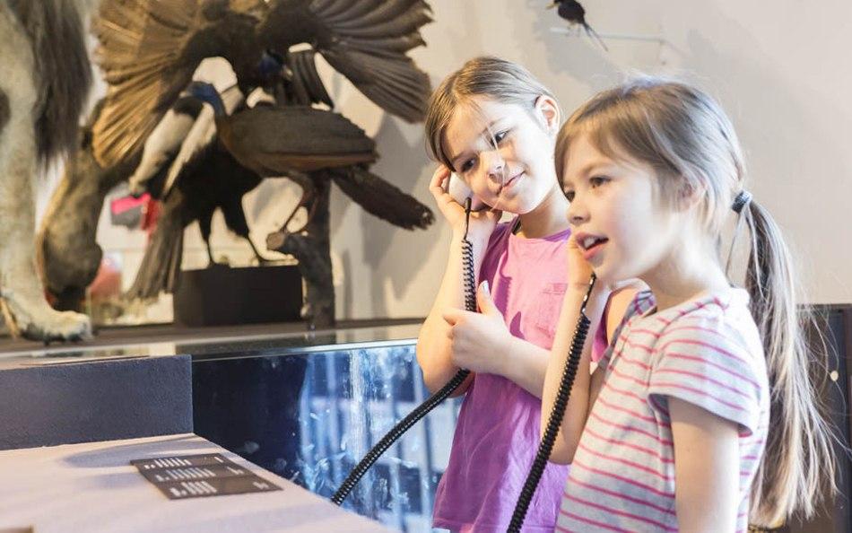 Wie überwintern Tier- und Pflanzenwelt? – Beispiele zeigt das Naturmuseum St. Gallen