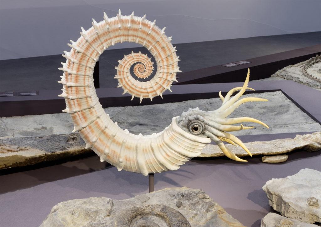 Naturmuseum St. Gallen: Alpstein-Fossilien und Grimmsches Tierleben im Zentrum