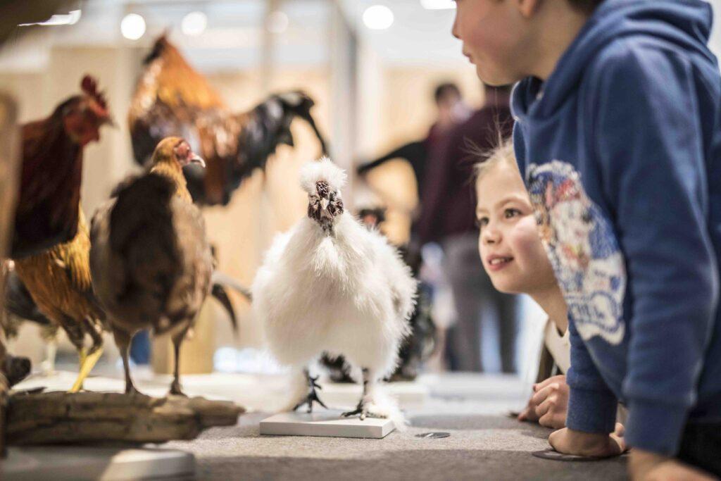 Allerlei rund ums Ei – vom Huhn bis zur Achat-Schnecke