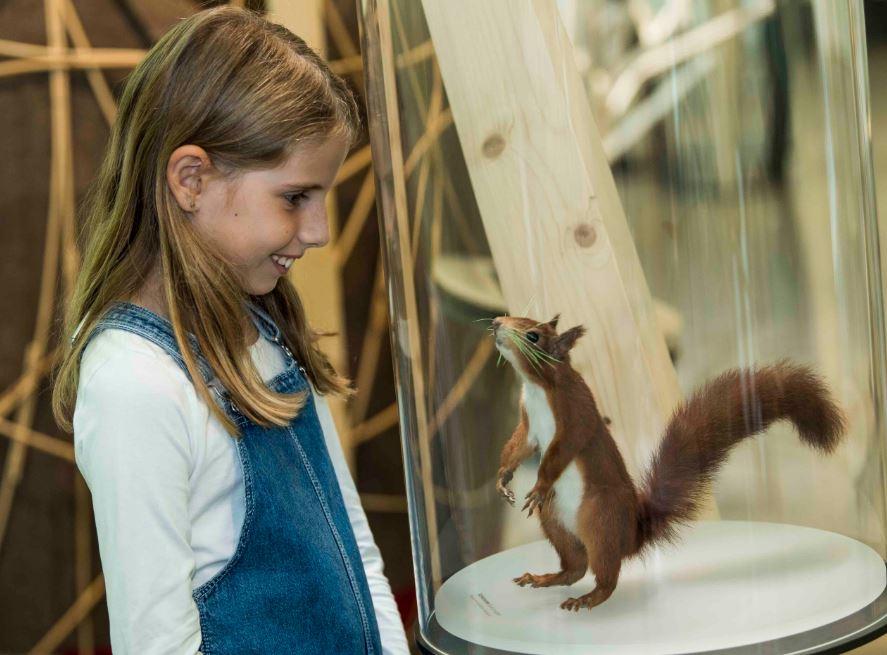 Sonderausstellung im Naturmuseum St. Gallen: Eichhörnchen – die Akrobaten in den Baumwipfeln